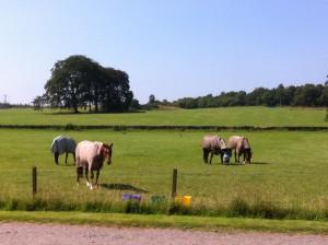 Front Geldings Field