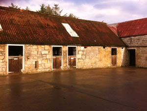 Top Row Stables